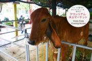 バンコク都内の水上マーケットを巡る③ クワンリアム水上マーケット(Kwan Riam Floating Market)のサムネイル