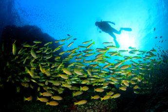 タイで海に潜りたくなる!世界的なタイ国内ダイビングスポット8つの映像のサムネイル画像