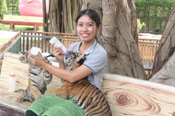 虎+ワニ+象と触れ合える!赤ちゃんトラと記念撮影&迫力満点のワニや象のショー!<日本語ガイド/往復ホテル送迎> <br/>ツアーID:6878のツアー画像