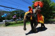 バンコク近郊で象乗りするならココ! 3つのエレファントパーク&動物園のサムネイル