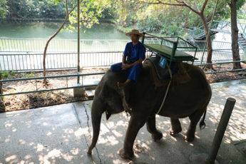 バンコクから一番近い象園!サンプラーンエレファントパークへのチャータータクシー(4人乗りタクシー1台の往復料金です)のサムネイル画像